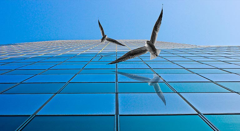 Bird Friendly Architectural Glass Options